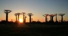 Coucher du soleil dans les baobabs