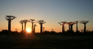 Sunset in the baobabs